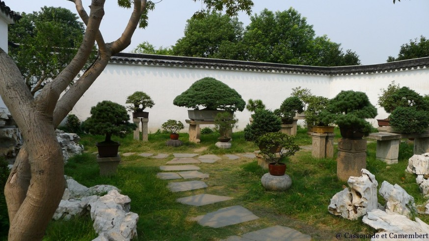 Collection bonzais suzhou jardin humble administrateur