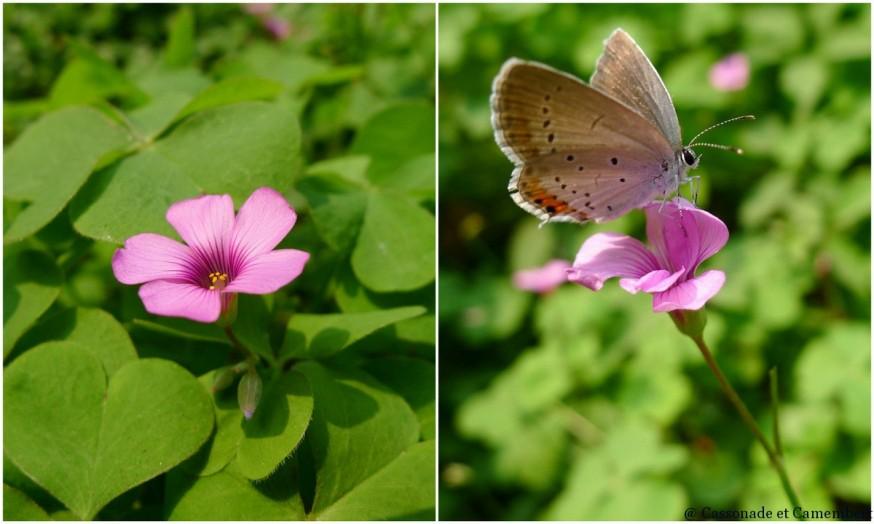 Papillon suzhou jardin humble administrateur