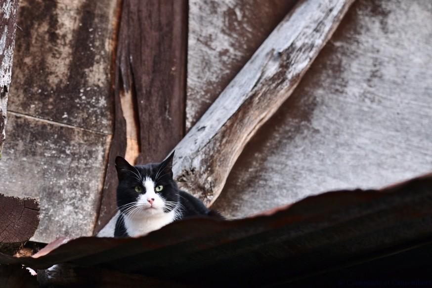 Chat perche au Bec-Hellouin
