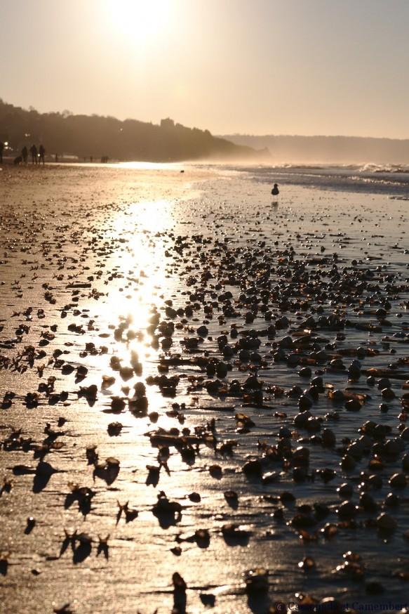 Soleil couchant plage Deauville