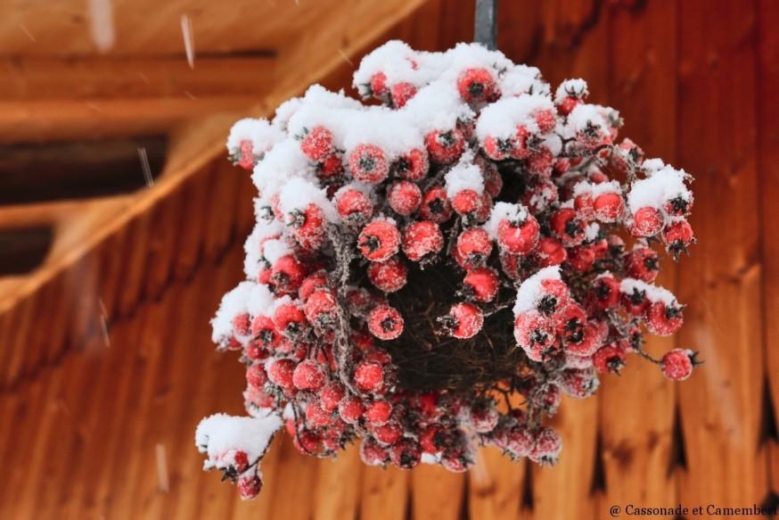 Fruits hiver pour oiseaux
