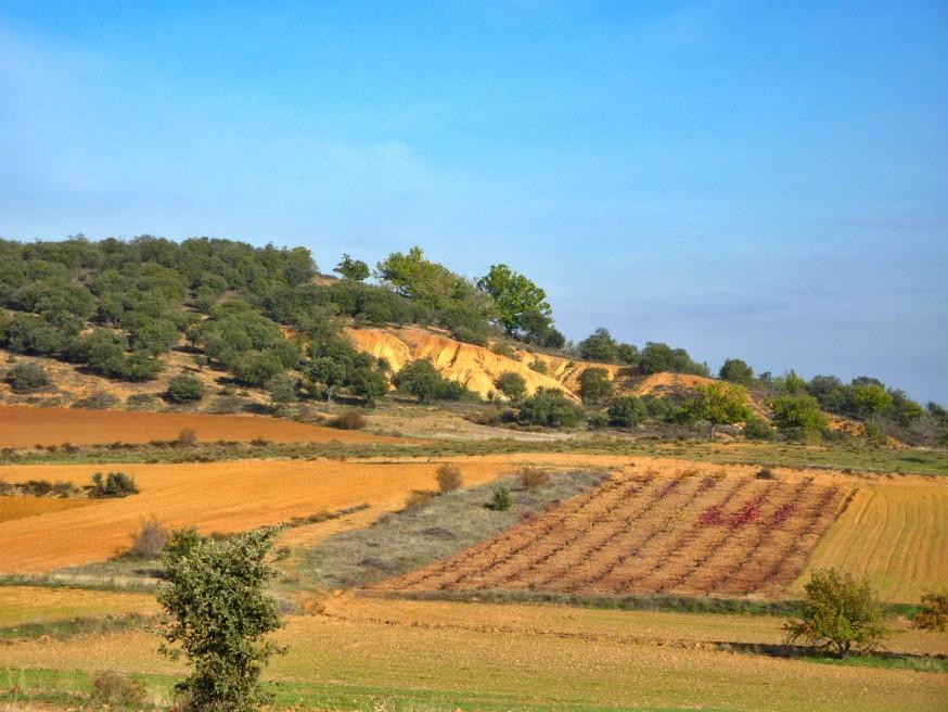 Champs vignes et oliviers - Compostelle Castille