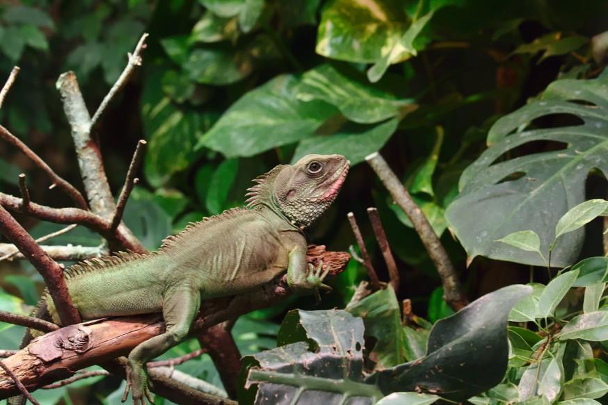 Reptile Zoo-Vivarium de Darmstadt