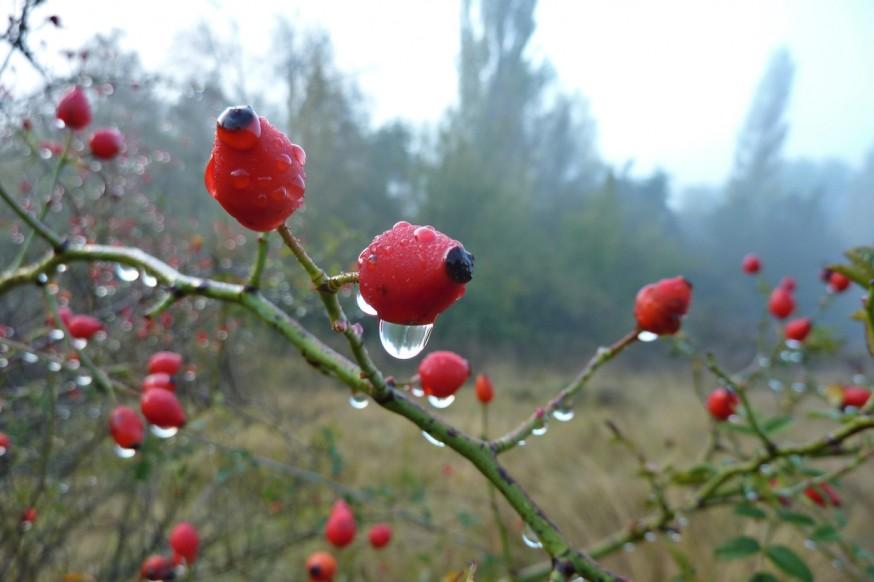 Rosée du matin compostelle pampelune