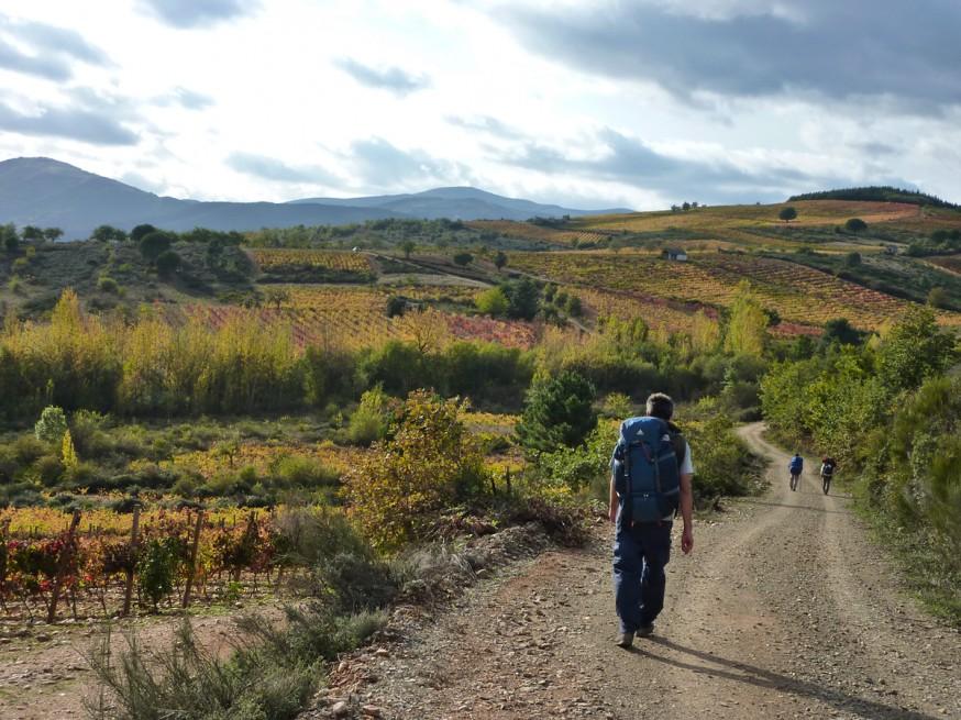 Compostelle - Bierzo - Chemin dans les champs de vignes en automne