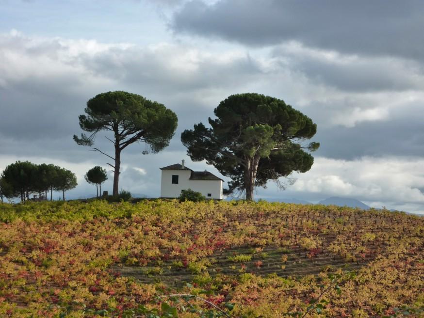 Compostelle - Bierzo - Petit abri dans les champs de vignes en automne