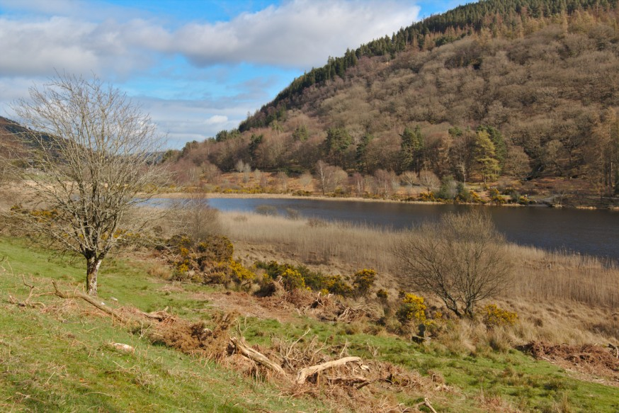 Lower Lake Glendalough