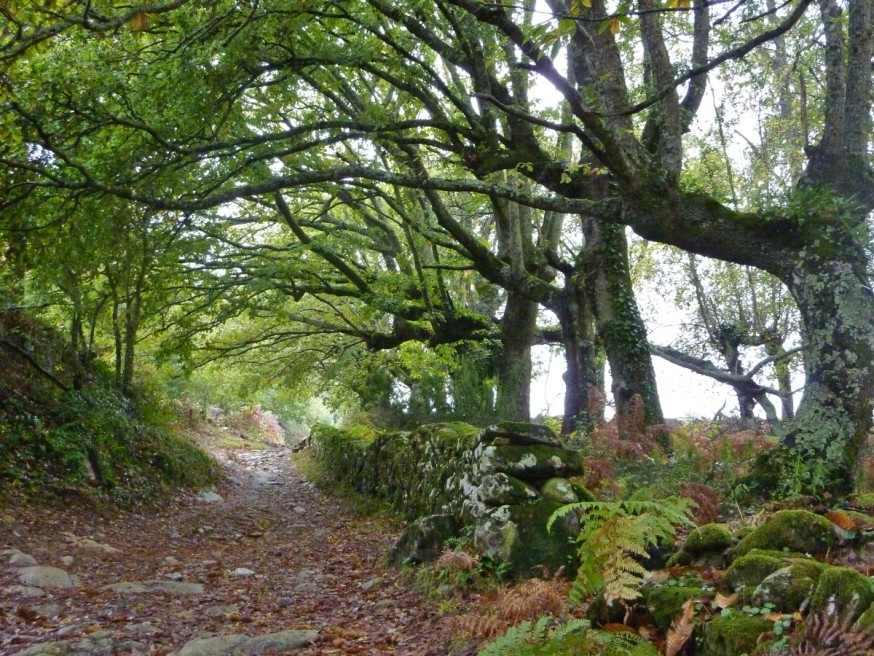 Compostelle - Galice - On se croirait en Irlande