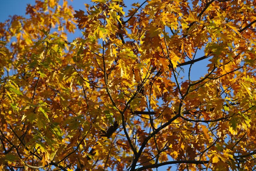 Couleurs d'automne - Darmstadt Bessungen