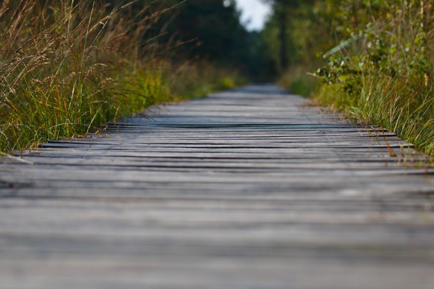 Chemin de planches - Tourbière - Marais Pietzmoor - Lüneburger Heide