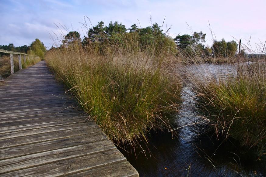 Chemin de planches sur l eau - Tourbière - Marais Pietzmoor - Lüneburger Heide