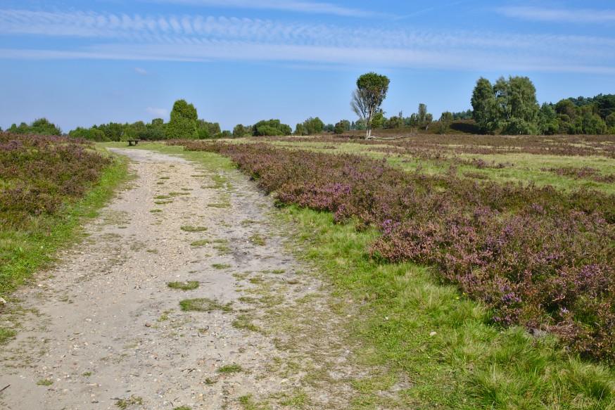 Chemin - Wilseder Berg - Lüneburger Heide