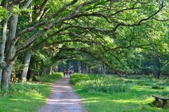 Chemin ombragé - Wilsede - Lüneburger Heide
