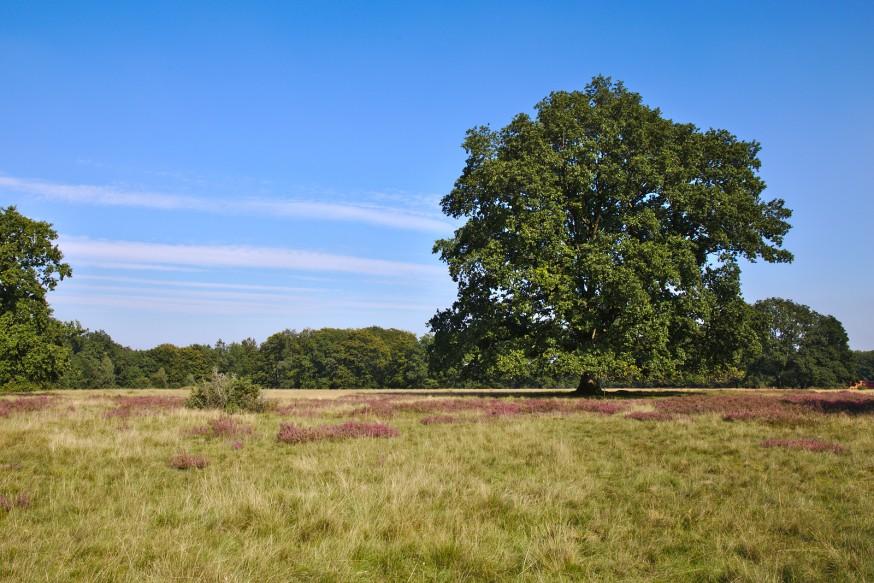 Fin d'été - Wilseder Berg - Lüneburger Heide